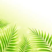 Palm leaves background Stock Photos