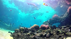 Big Aquarium in the Gold Coast 4K Wide LOOP Stock Footage