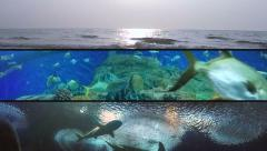 Sunset Tracking with Many Species of Fish, Sharks and Sea Turtle. - stock footage
