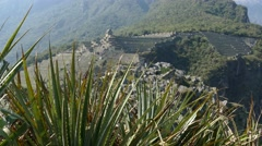 machu picchu ruins pan aloe vera - stock footage