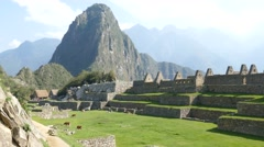 Machu picchu ruins courtyard lama Stock Footage
