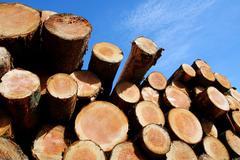 stockpile of logging timber - stock photo