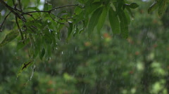 Maui, UpCountry, Rain During The Day. Stock Footage