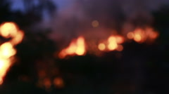 Blur or Defocus Fire burn storm in the forest. Stock Footage