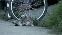 Tabby Cat Beside Bicycle Stock Footage