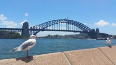 SYDNEY HARBOUR BRIDGE, AUSTRALIA Stock Footage
