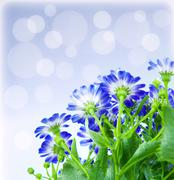 floral border - stock photo