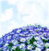 floral daisy border - stock photo