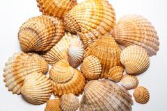 seashells on white background - stock photo