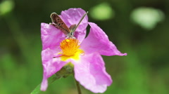 Wild pink flowers blowing in deep forest floor, Butterfly on the flower - stock footage