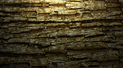 Rolling Tree Bark Background - stock footage