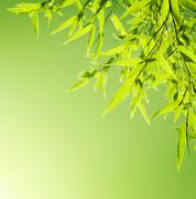 fresh bamboo leaves border - stock photo