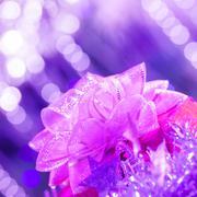 Purple gift bow Stock Photos