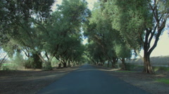 Oak Trees in Davis CA on Empty Road Stock Footage