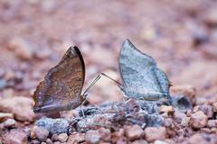 Butterfly in pang sida national park  thailand Stock Photos