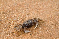 Crab on the beach Stock Photos