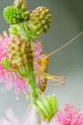Grasshopper on blade of grass Stock Photos