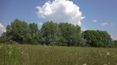 Walking in spring meadow, get close  Stock Footage