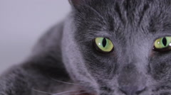 Close Up Of A Russian Blue Cat's Yellow- Green Eyes, Slow Motion Stock Footage