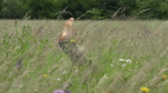 Barefoot feel the spring wind, sole playing  - stock footage