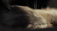 Beautiful Russian Blue Cat Sleeping In The Sun, Hand Held Camera, Feline, Pet - stock footage