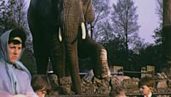 London 1965: family at the zoo Stock Footage