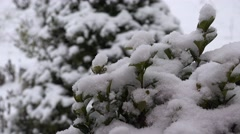 ULTRA HD 4K Close up snow flake fall green leaf bush winter cold weather calm  - stock footage