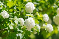 Beautiful white flowers in nature Stock Photos