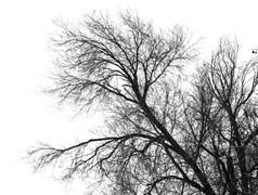 Bare branches of a tree on a white background Stock Photos