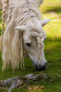 pony with pigtail - stock photo