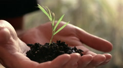 Close up man's hands holding new growth plant Stock Footage