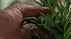 Close up of man's fingers caressing delicate plant Stock Footage