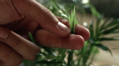 Close up of man's fingers caressing delicate plant leaves Stock Footage