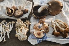 Studio shot of mushrooms on dishcloth - stock photo