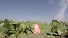 A farmer is looking for cute baby in the cabbage patch Stock Footage