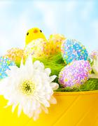 Colorful easter eggs with chick Stock Photos