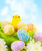 Chick with easter eggs Stock Photos