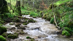 Small creek inside green forest in spring Stock Footage