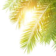 green palm leaves border - stock photo