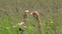 Woman hands coming from green grass , tear off daisy flower petals, windy  - stock footage