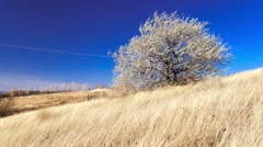 Wind in the Ukrainian steppes, lonely tree, grass and blue sky HD time lapse Stock Footage