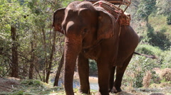 Elephant drinking water - stock footage