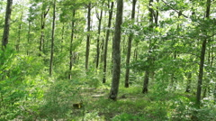 Steady cam shot, walking on a path in the spring forest, Personal perspective Stock Footage