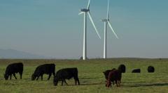 Medium Shot of Wind Turbine Farm & Herd of Cattle Stock Footage