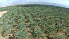 Aerial view of Date Palms near the dead sea, Israel Stock Footage
