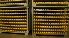 Hard cheese on shelves in the storage Stock Footage