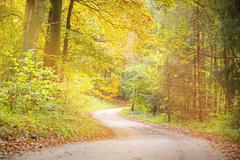Dreamy way through an autumn forest Kuvituskuvat