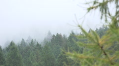 Foggy, Rainy Forrest Day Pan Stock Footage