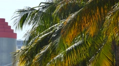 Palm fronds in the wind Miami scene Stock Footage