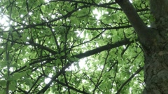 Tree Canopy static.mp4 Stock Footage